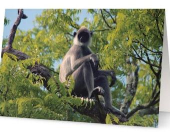 Langur Monkey Blank Greetings Cards (Pack of Five)