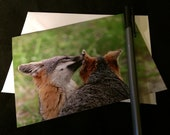 Island Fox Nature Photograph Blank Greetings Card