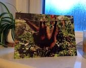Orangutan Swinging through the Trees Wildlife Photograph Blank Greetings Card