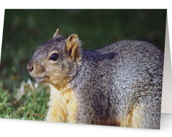 Squirrel Blank Greetings Cards (Pack of Five)