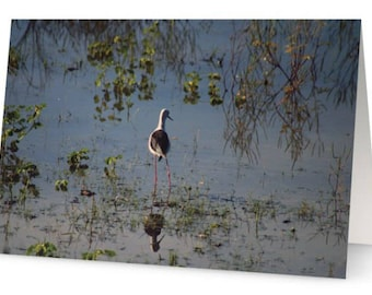 Wading Bird Blank Greetings Cards (Pack of Five)