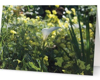 Calla Lily Greetings Cards (Pack of Five)