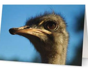 Ostrich Blank Greetings Cards (Pack of Five)