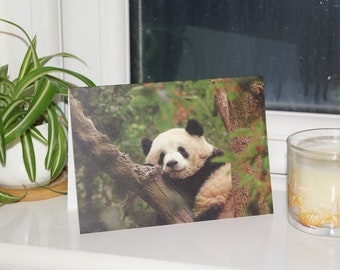 Giant Panda Wildlife Photograph Blank Greetings Card