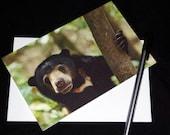 Sunbear Wildlife Photograph Blank Greetings Card