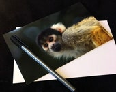 Squirrel Monkey Wildlife Photograph Blank Greetings Card