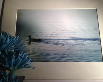 "Serene Waters - Mounted Wildlife Photo Print (16"" x 12"")"