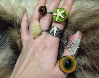 Taxidermy eye, coyote tooth,starfish, and stone rings.