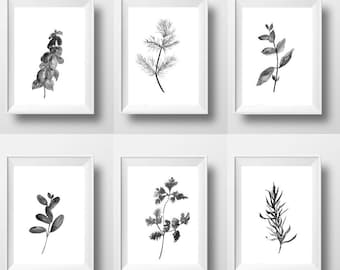 Kitchen herbs Set of 6 print watercolor painting wall art herbal plants poster black and white illustration decor 16x20 24x36 4x6 sizes