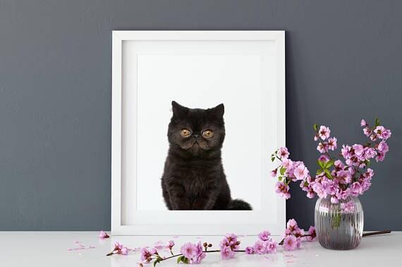 Katze poster kinderzimmer bilder tiere poster tier motiv for Kinderzimmer bilder tiere