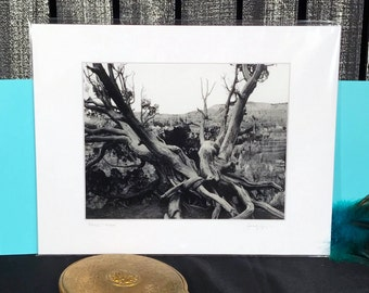 Bryce Canyon - black and white photograph