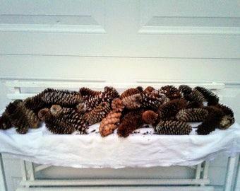 Missouri Natural Pinecones 2 Pounds Unscented Bag #G for crafts / decor