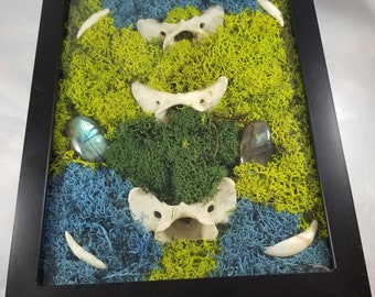 Coyote Spirit Shadow Box! Ossuary, Reliquary, Taxidermy