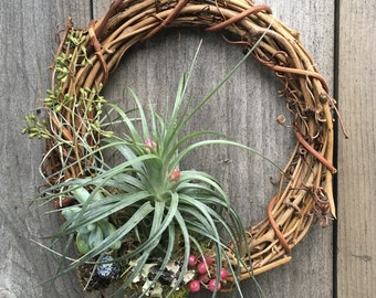 Living Indoor/Outdoor Air Plant Succulent Grapevine Wreath Wall Hanging