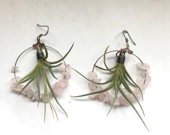 Living Air Plant (Tillandsia) Hoop Earrings- Funky Unique Custom Made Green Jewelry