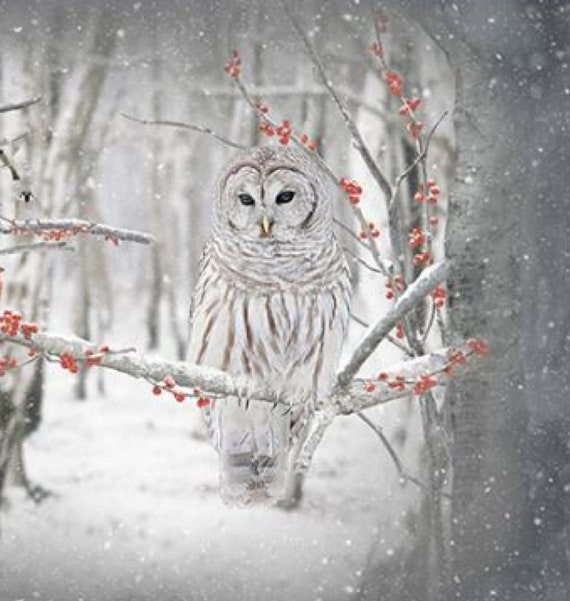 PANEL ONLY Call of the Wild - Owl in Birch - Create your very own touch of wilderness with this wonderful panel