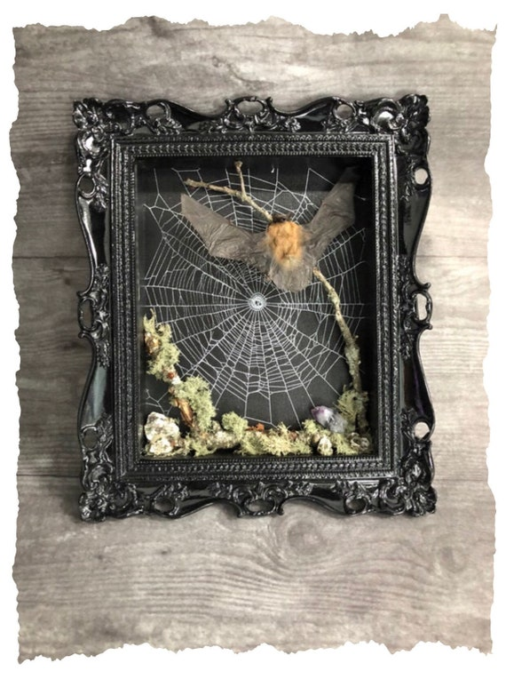 Gothic Shadow Box,  Preserved Spider Web, Framed Spider Web, Spider Web Art, Spider Taxidermy, Real Nature Decor, Gothic Home Decor