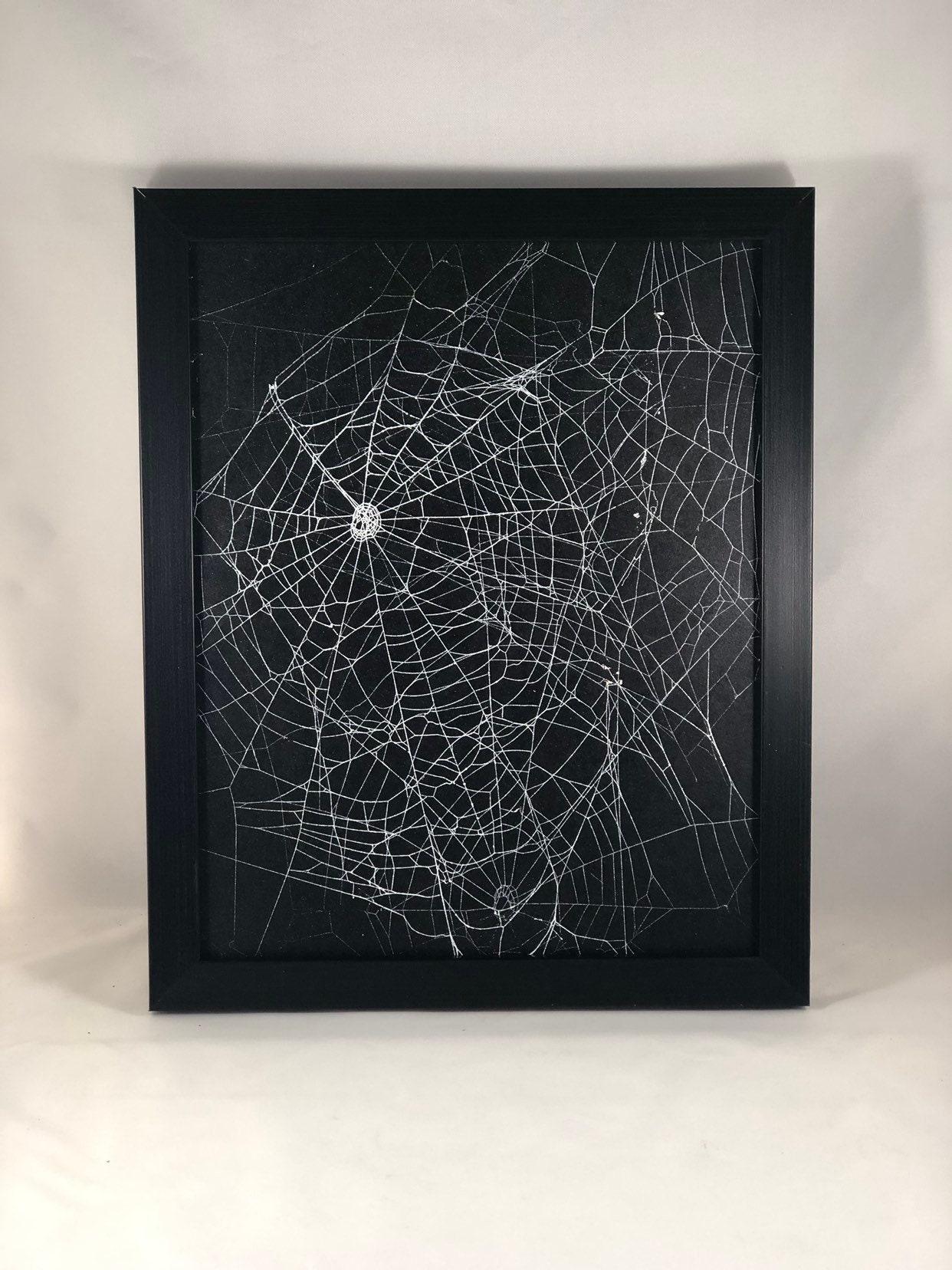Genuine Preserved Spider Web Framed Spider Web Real Spider Web Orb Weaver Black Frame Real Spider Web