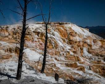 MAMMOTH Hot Springs - Yellowstone National Park, WYOMING. 2020 photograph by Nathaniel Shannon