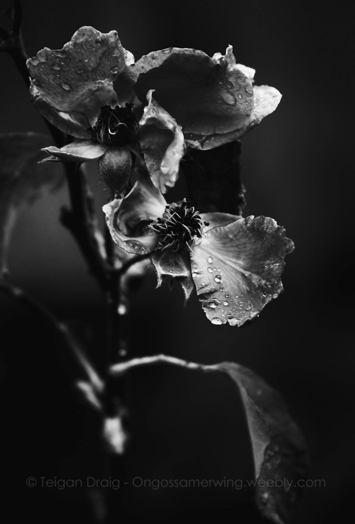 Black And White Floral Rose Flower Nature Fine Art Photography Etsy