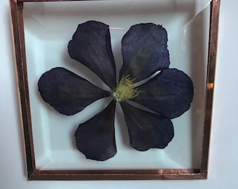 """Real Pressed Flower Wall Hanging   Clematis   3"""" Square Beveled Glass with Copper Edging   Ornament   Botanical Home Decor"""
