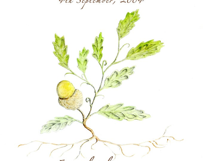 From Little Acorns Mighty Oaks Grow.  Digital JPEG personalised artwork.  To celebrate a New Baby or a gift for the proud Grandparents.