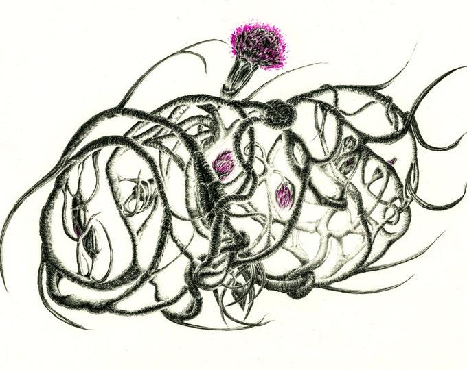 Pencil Drawing Botanical Print Botanical Art Botanical Illustration Signed Art Print
