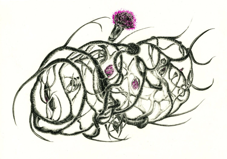 Pencil Drawing Botanical Print Botanical Art Botanical Illustration