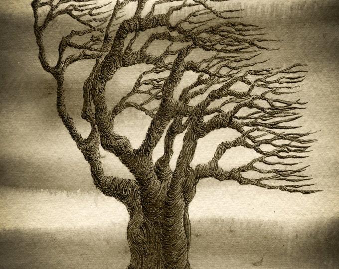 Pen Ink Tree, Abstract Tree Art, Sepia Tree Print, Windswept Tree Art, Signed Tree Art, Watercolour Tree Art, Tree on Rock