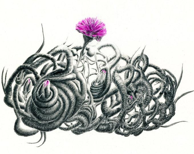 Pencil Drawing - Botanical Print - Botanical Art - Abstract Art - Abstract Print - Signed Art - Carnation Print - Giclee Print - Twi