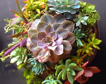 Custom order/succulent plant/Succulent art/succulent garden/cactus/succulent arrangement/succulent arrangement/floral arrangement