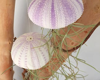 Suspendu usine jardinière/air/plante/plante intérieur art/plante art/succulentes/Noël ornement/succulentes jardin/air plante porte/espagnol moss