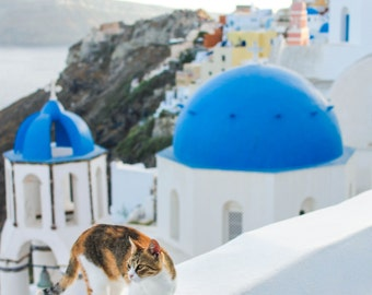 Cats of Oia, Santorini | Greece Photography