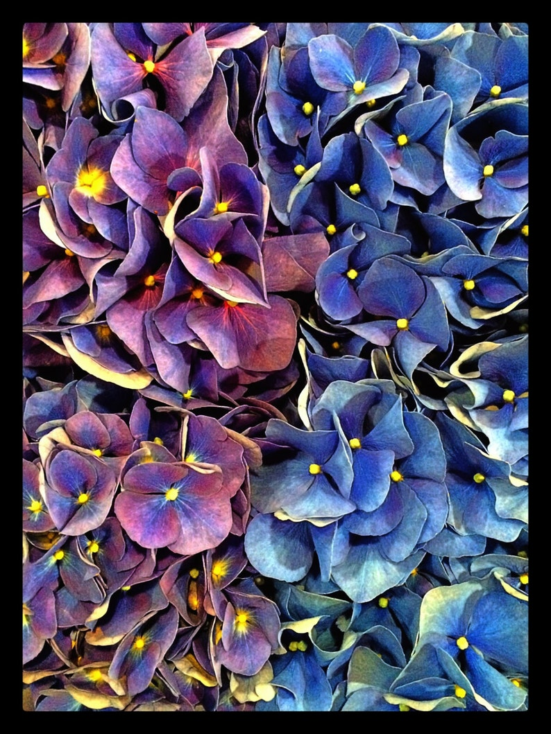 Set of 8 Floral Art Note Cards Shades of image 0