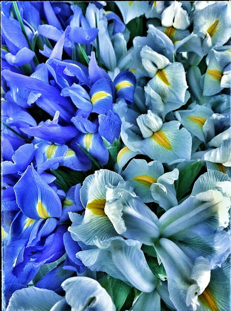 Set of 8 Floral Art Note Cards Blue & Blue with image 0