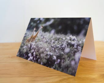 Greeting Card Pack - 5 x 7 inch Folded  - Sandhill Cranes Hunting in the Snow, Jackson Hole, Wyoming