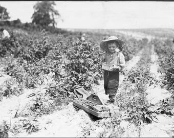 Poster, Many Sizes Available; A Four Year Old Helper In The Berry Fields. Mother Said,_He Helps A Little._Rock, Creek, Md. Nara 523211