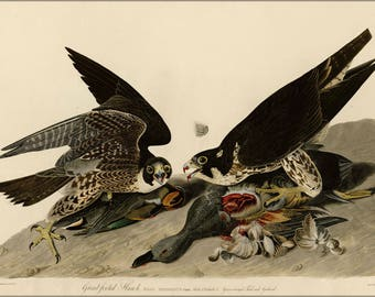 Poster, Many Sizes Available; Great Footed Hawk Audubon