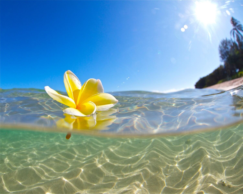 Underwater hawaiian plumeria photographyyellow flower etsy zoom izmirmasajfo