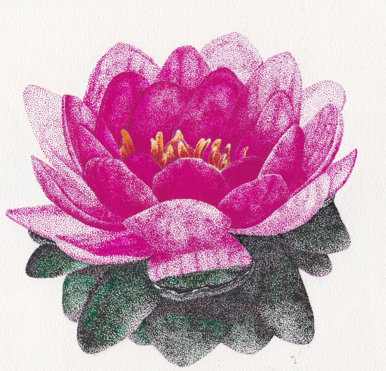 Seerose Pointillismus Tusche Zeichnung 7 x 7 zeichnen mit   Etsy