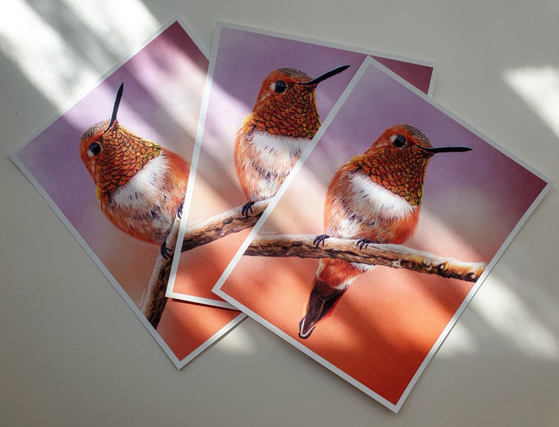 LIMITED EDITION Hand Signed Print of Rufous Hummingbird Pastel Drawing Eco Friendly Prints Wildlife Artist Vanessa Grundy