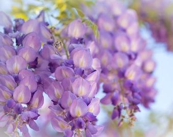 Soft Lilac, 3Butterflies Photography, flower, vine, garden, summer, flower cluster.