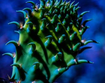 Bold Cactus Color, 3Butterflies Photography, photos, photography, flower, spring, summer, bold colors, garden, blue, desert, cactus, Arizona