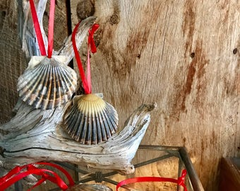 Set of 5 Scallop Shell Ornaments from Cape Cod Choose from Gloss Silver or Gold with Red Green Pink Blue or White Ribbon