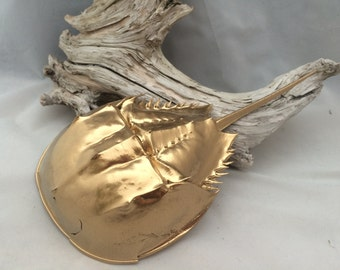 Gold Painted Atlantic Horseshoe Crab Shell with Tail Naturally Collected from Cape Cod Bay Full Molt Medium Size 10-14 Inches Long Sea Decor