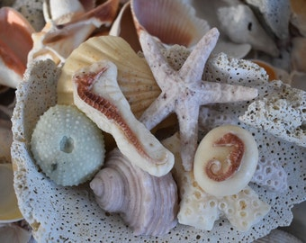 8 Large Sea Shell Soaps