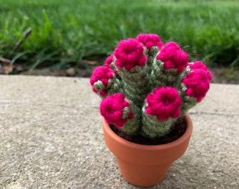 Spoon Jade Crocheted Succulent in Terra Cotta Pot