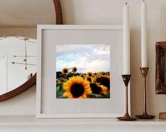 Sunflower field at sunset - Sunflower photography - Farmhouse decor - Botanical art print - Sunset photography blue hour - Home office decor