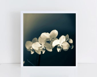 Orchids - Delicate petals - Close-up - Flower photography - Nature photography - Wall art - Fine art print - Bathroom decor - Housewarming
