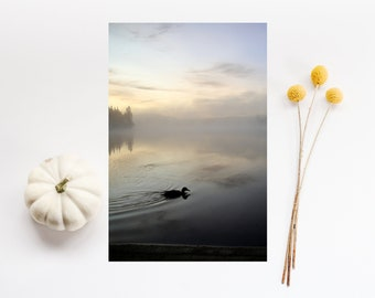 Cottage wall decor - Wildlife fine-art photography - Duck wall art print - Duck picture - Travel photography poster - Bird art wall hanging